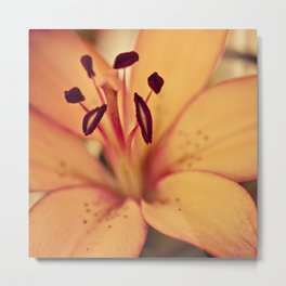 Burnt Umber Metal Print
