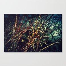 Spring Budding Canvas Print