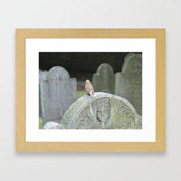 Sparrow in King's Chapel Burying Ground Boston Framed Art Print