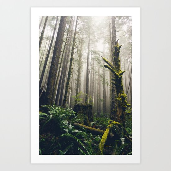 Rainforest Fog Art Print