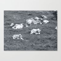 cows Canvas Prints featuring Cows by Mr and Mrs Quirynen