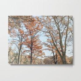 Autumn Scenes II Metal Print