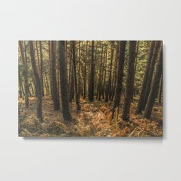 Forest #12 Metal Print