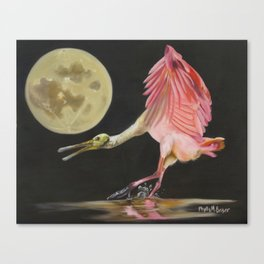 Moon Over Mississippi A Roseate Spoonbills Perspective Canvas Print