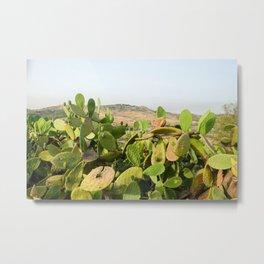 Prickly Pear in Sicily Metal Print