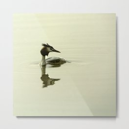 Photograph of a Grebe reflecting in the water Metal Print