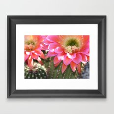 Desert Bloom Framed Art Print