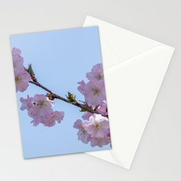 pink sakura flower in bloom Stationery Cards
