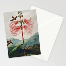 Robert John Thornton - Large–Flowering Sensitive Plant Stationery Cards
