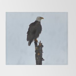 Bald Eagle in Jasper National Park, Canada Throw Blanket
