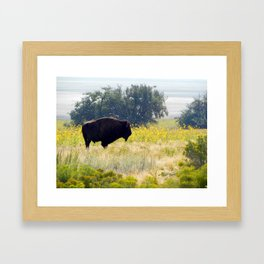 Buffalo Sunflowers Framed Art Print