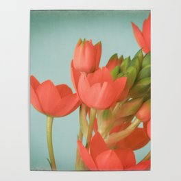 Coral Flowers Poster