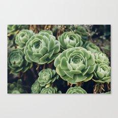 Succulent - Part II Canvas Print
