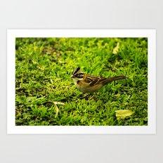 Running Sparrow Art Print