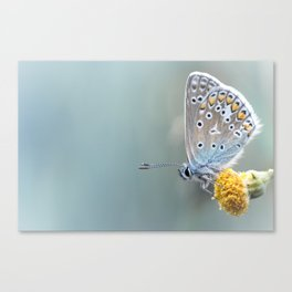 Composition in Yellow and Blue....  Canvas Print