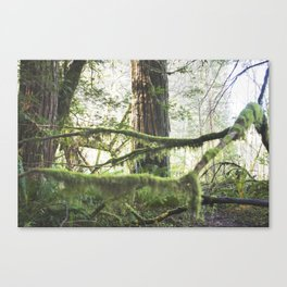 Forest Tree Jedediah Smith State Park  Canvas Print