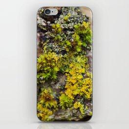 Moss on a Fallen Tree iPhone Skin