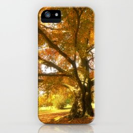 Copper Beech in Autumn Glow iPhone Case