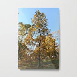 Mighty Tree Metal Print