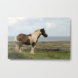 Irish Cob on Green Metal Print