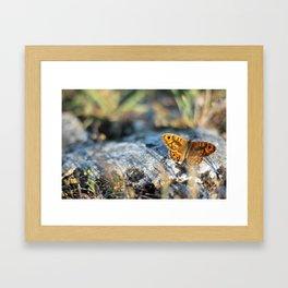 Beautiful orange-black colored butterfly Framed Art Print