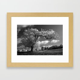A Tree Blows in the Wind Framed Art Print