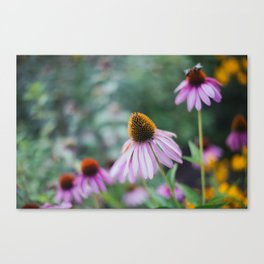 Pink Coneflower Garden Canvas Print