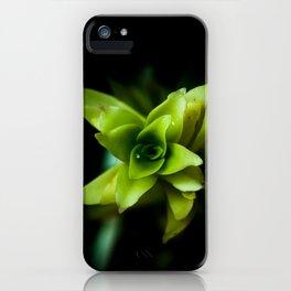 Aptenia succulent plant iPhone Case
