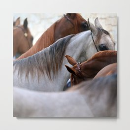 Horsin' Around Metal Print