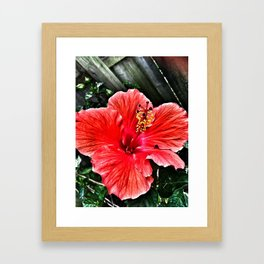 Habiscus Framed Art Print