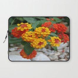 Macro Of Shrub Verbenas or Lantanas (Lantana Camara)  Laptop Sleeve