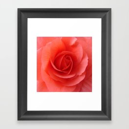 Rose Delicate Framed Art Print