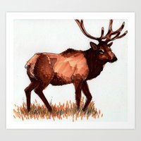 Roosevelt Elk Art Print