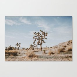 Joshua Tree II Canvas Print