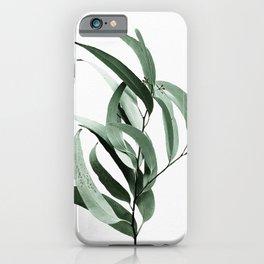 Eucalyptus - Australian gum tree iPhone Case