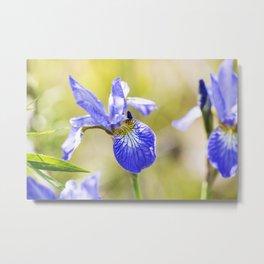 Northern Blue Flag Iris 2 Metal Print