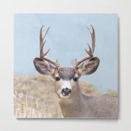 Watercolor Deer, Mule 15, Estes Park, Colorado, Teeth-gritter Metal Print