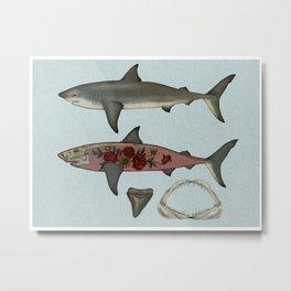 Shark 1 Metal Print