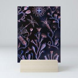 Ode to Haeckel's Deep Dark World Under the Sea Mini Art Print
