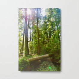 cathedral grove, 2017 Metal Print