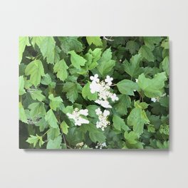 Summur Blossoms Metal Print