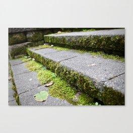 Mossy Steps Canvas Print