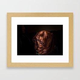 Izaak the Vizsla Framed Art Print