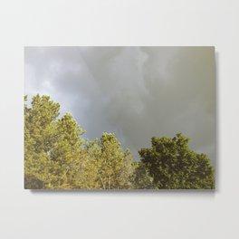 Sunlit trees and rainclouds. Metal Print