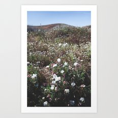 Spring in the Mojave Desert Grasslands Art Print