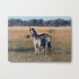 Zebras in the Serengeti Metal Print