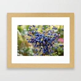 Blue Berries in Monet's Garden  Framed Art Print