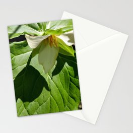 Shadow of a White Trillium Stationery Cards