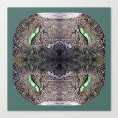 Wormhole  - Luna Moth Caterpillar Canvas Print