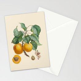 Vintage Botanical Illustration - Abricot-Peche Antoine Poiteau Stationery Cards